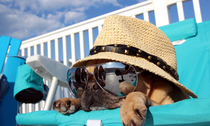 Pour des vacances sereines avec votre animal de compagnie !