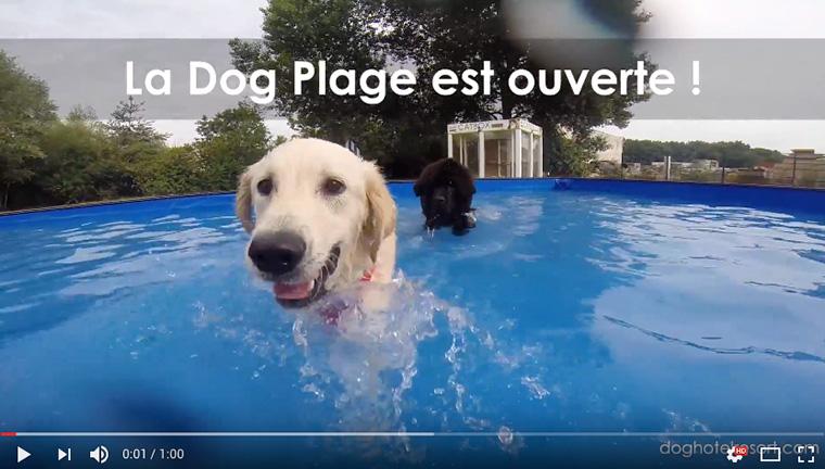 La DOG PLAGE : 1ère piscine pour chien