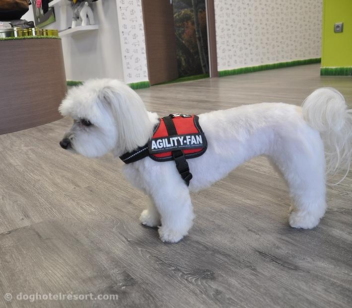 dog hotel resort - visuel matériel boutique