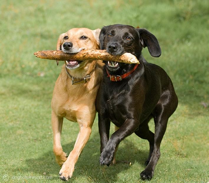 Jeux - DOG HOTEL RESORT