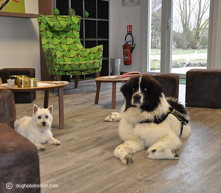 café canin - DOG HOTEL RESORT