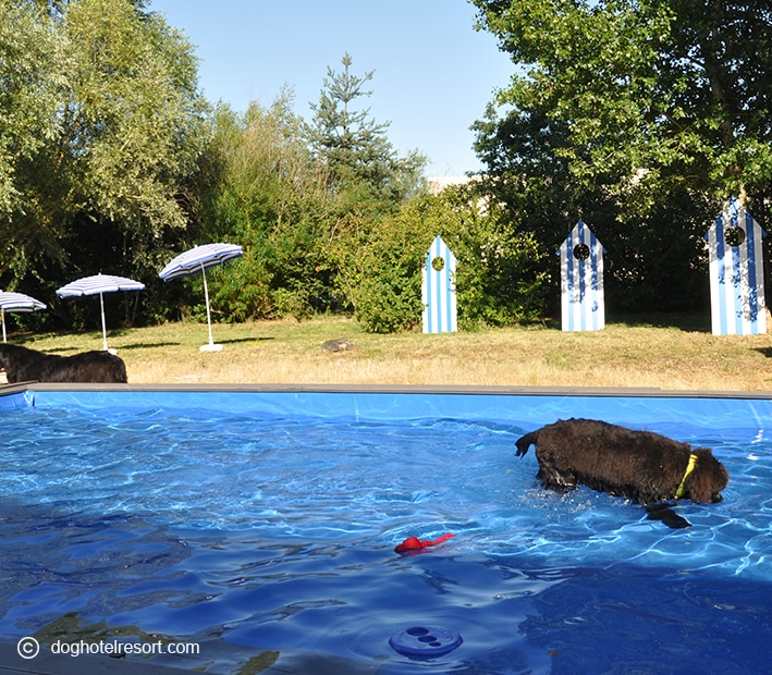 jeux - piscine extérieure - DOG HOTEL RESORT
