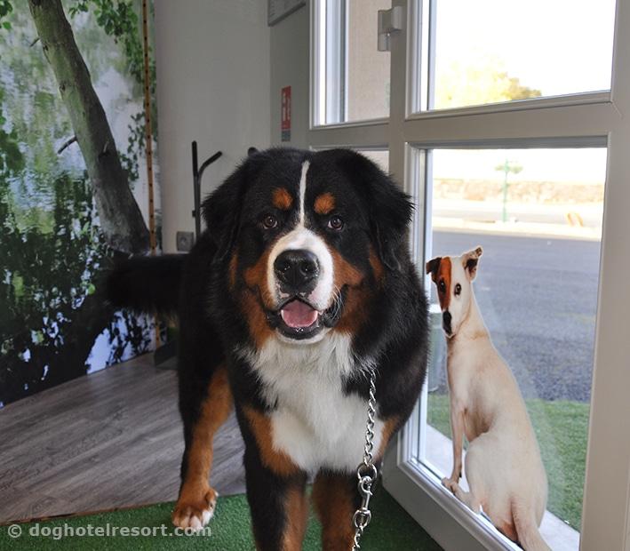 dog hotel resort - visuel chien à l'accueil