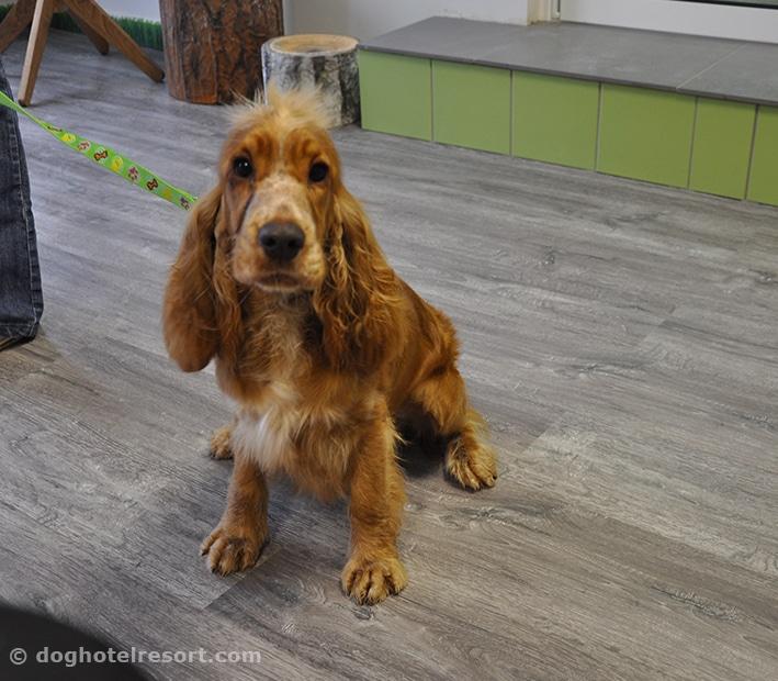 dog hotel resort - visuel chien dans la boutique