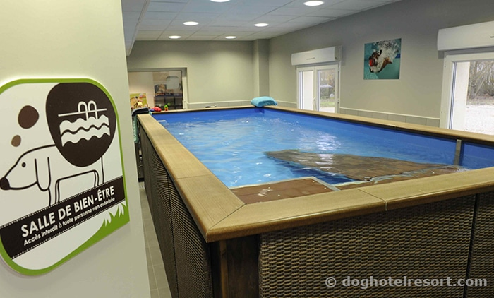DOG-HOTEL-RESORT-hydropratique-salle