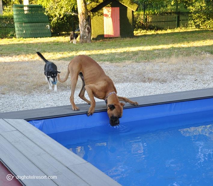 Piscine pour chiens - DOG HOTEL RESORT