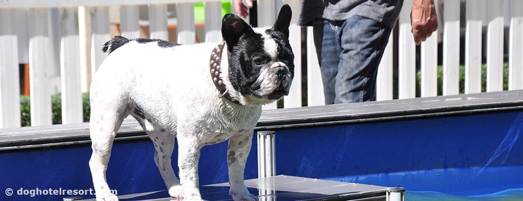 PISCINE POUR CHIEN - DOG HOTEL RESORT