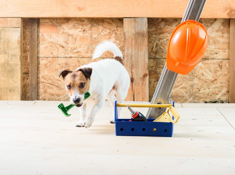 Travaux, intervention d'entreprise à votre domicile ? Optez pour le service de garderie du DOG HOTEL RESORT
