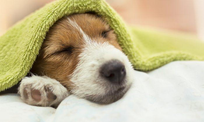 Faire garder son animal : une démarche pas sans conséquence pour un chien