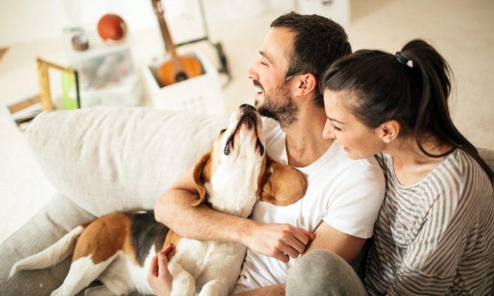 Les 10 idées reçues sur les chiens – À oublier !